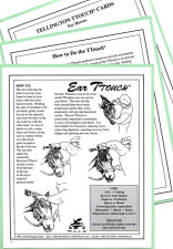 TTouch of Magic Cards for Horses - PDF