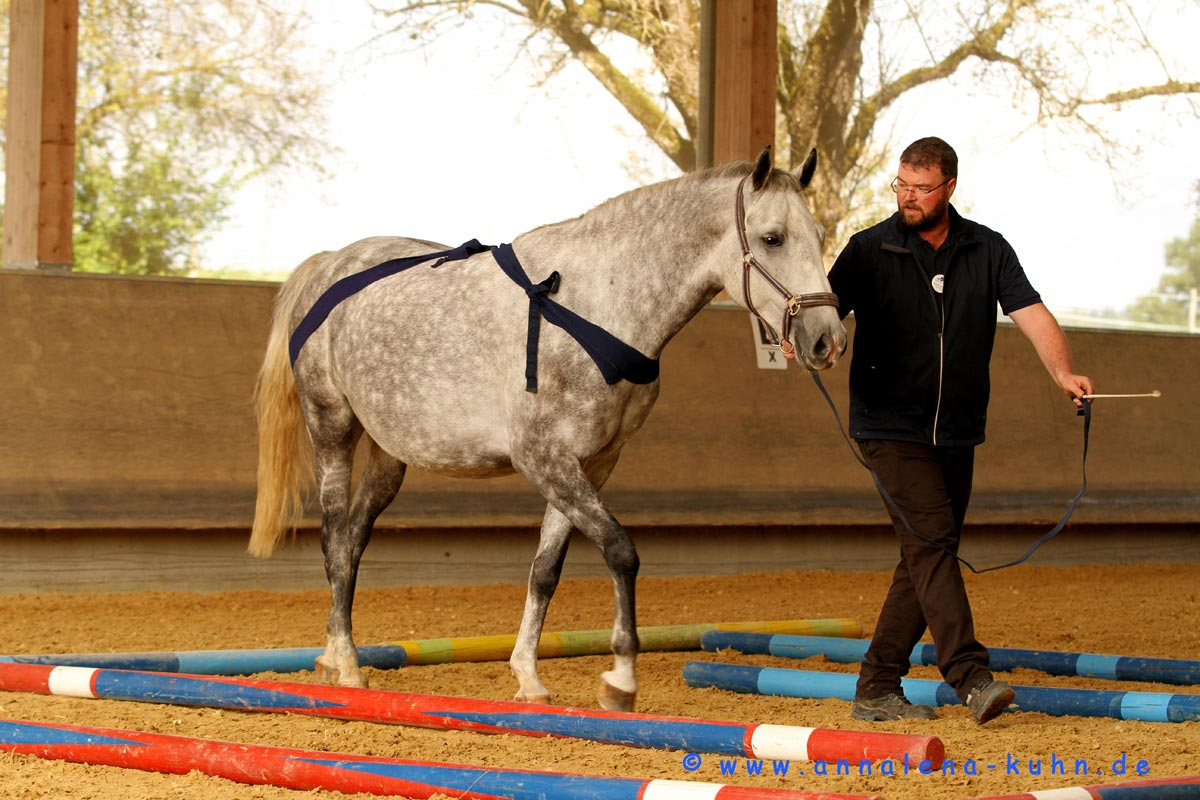 The Tellington Method for horses enhances the riding experience.