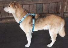 TTouch® Harmony Harness