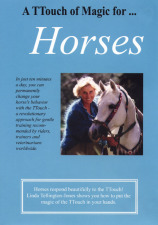 TTouch of Magic for Horses DVD