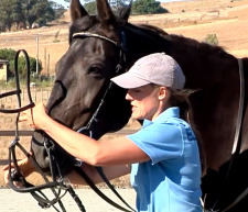 Tellington TTouch® Method Virtual Learning Center: Lindell Sidepull (Bitless Bridle)