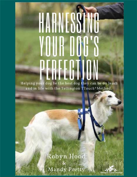 Harnessing Your Dog's Perfection