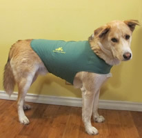 Thundershirts: The Best Solution for Dog Anxiety - Green with TTouch Logo